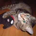 我が家の愛猫1歳の時